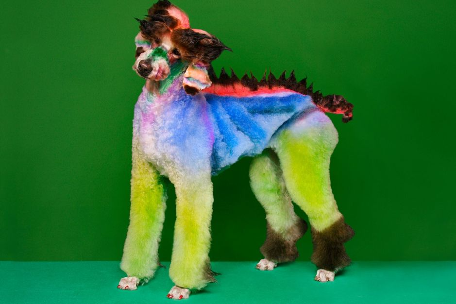 Mad Groomed Dogs - Dragon