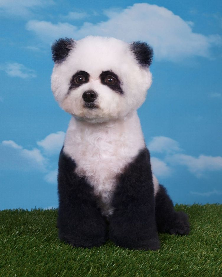 Mad Groomed Dogs - Panda