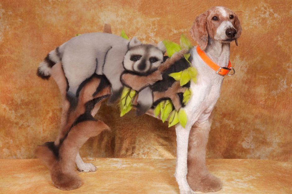 Intergrooming - Mad Groomed Dogs Raccoon