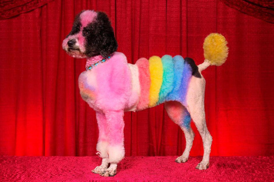 Mad Groomed Dogs - Rainbow