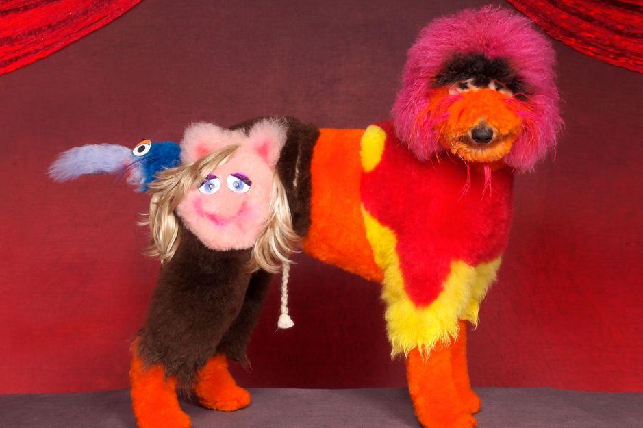Mad Groomed Dogs - Sesame Street