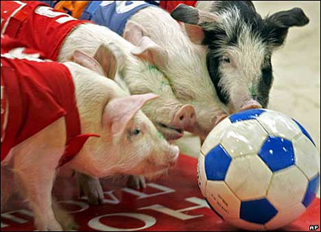 Pig Olympics - Pig Ball