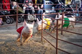 Pig Olympics - Running